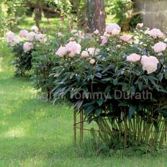 8 Flower Landscape Ideas For Your Garden – Garden Ideas 101 Back Gardens, Small Gardens, Outdoor Gardens, Flower Farm, Flower Beds, Hanging Succulents, Flower Landscape, Peonies Garden, Garden Cottage