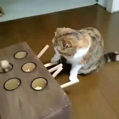 Cat GIF - from Catherine Schawacker Cute Funny Animals, Funny Animal Pictures, Cute Cats, Funny Cats, Animal Pics, I Love Cats, Crazy Cats, Animals And Pets, Baby Animals