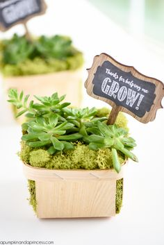 """Berry basket succulent homemade Mother's Day gift idea - This easy DIY succulent gift makes a great homemade Mother's Day gift. Includes free printable """"Thanks for helping me grow!"""" tags."""