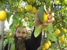 YouTube Grafting Plants, Small Farm, Green Life, Oven, Garden, Garten, Lawn And Garden, Ovens, Gardens