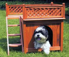 Outdoor Room with a View Dog House