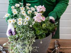 Slik planter du i krukkene Herb Garden, Flora, Planters, Herbs, Outdoors, Terrace, Lavender, Planter Boxes, Herb
