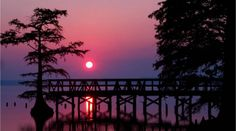 Reelfoot Lake State Park | TN State Parks....This is one of my favorite places! I will share my own pictures sometime!!!