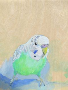 Percy Young Budgie Budgerigar Gouache painting on Birchwood panel Lydia Paton Bluethumb online art gallery