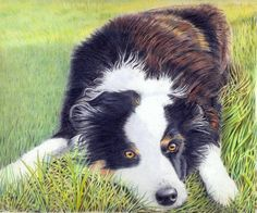 Coloured Pencil Art Inspiration for our upcoming Animals exhibition http://www.myart.com.au/wp-content/uploads/animal12entry.pdf
