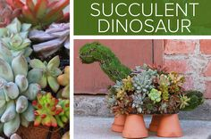 This Adorable Succulent Dinosaur Is The Perfect Addition To Your Porch