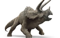 "Triceratops means ""three-horned face"". You can see this famous herbivore at the Triceratops Te. Jurassic World Triceratops Jurassic Park Film, Jurassic World 2015, Extinct Animals, Zoo Animals, Falling Kingdoms, Dinosaur Art, Artwork Images, Prehistoric Creatures, Reptiles And Amphibians"