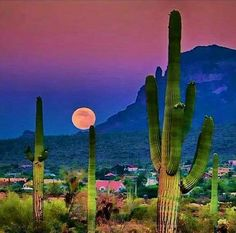 I live in Arizona, & we are about fifteen minutes away from our beautiful desert Beautiful Moon, Beautiful Sites, Beautiful Places, Tucson Sunset, Desert Pictures, Fantasy Pictures, Southwest Art, Earth From Space, Sunset Photos