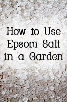 Tomato Plants Epsom salt can make your plants bloom more often, be greener, and be healthier. - How to Use Epsom Salt in a Garden Epsom Salt For Plants, Epsom Salt Uses, Epsom Salt For Grass, Epsom Salt In Garden, Epsom Salt Tomato Plants, Epsom Salt For Tomatoes, Organic Gardening, Gardening Tips, Indoor Gardening