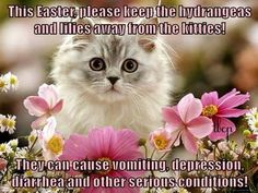 The Best Cat Page, Facebook https://www.facebook.com/pages/The-Best-Cat-Page/994713583879307