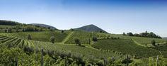 Colli Berici  #italy #veneto #vicenza #colli #nature #landscape