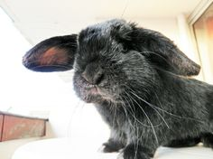 Curious Bunny Leans in Close to Get a Good Look at the Camera s