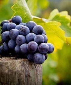 Hope Estate - grape