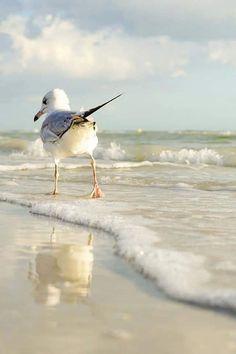 le sentiment de la mouette ⚓ photo by tina nord (seascape marine beach) Photo Animaliere, Photo D Art, Sea And Ocean, Ocean Beach, Beautiful Birds, Animals Beautiful, Beautiful Images, Beautiful Beach, Animals And Pets