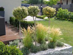 Ogród Tosi - strona 327 - Forum ogrodnicze - Ogrodowisko; trawki pod trzmielinami na nogach - to są stipy