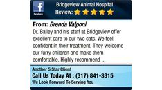 Dr. Bailey and his staff at Bridgeview offer excellent care to our two cats.  We feel...