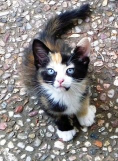 If I ever encounter a chance to adopt a beautiful one like this (who's nice!).. then I may have a kitty pet...