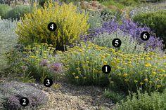 1 : Achillea coarctata 2 : Thymus ciliatus 3 : Allium christophii 4 : Anthyllis cytisoides 5 : Ballota acetabulosa 6 : Salvia lavandulifolia subsp. blancoana