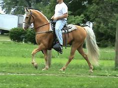 HORSECLICKS twh