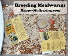 When we decided to get chickens, I knew I wanted to make it as easy and affordable as possible. The costs of non-GMO feed can really add up (we don't …