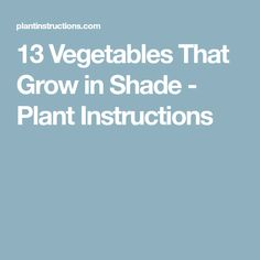 13 Vegetables That Grow in Shade - Plant Instructions