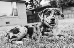 Brittani Preece Photography Dog photography  Natural Light  Www.facebook.com/brittanipreecephotography Instagram: @brittanipreece