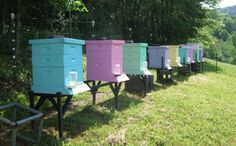 pastel painted beehives