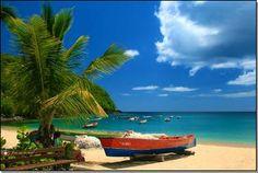 Gommier à l'Anse Dufour - Martinique