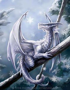 winter dragon -  Anne Stokes