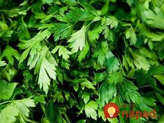 I love cilantro! A Plant Spacing Guide for Cilantro in a Square Foot Garden Cilantro Plant, Basil Plant, Parsley Plant, Cilantro Chutney, Cilantro How To Store, Parsley Recipes, Healthy Herbs, Square Foot Gardening, Growing Herbs