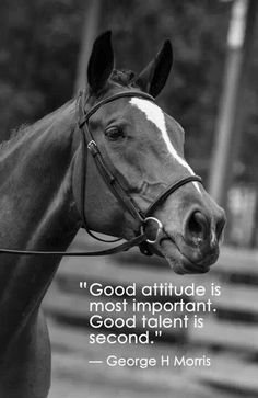 You could have the best performing horse, or be the best rider in the world, but if there is a bad attitude from either one, it doesn't matter how talented you are.