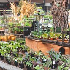 Roger's Gardens (@rogersgardens) • Instagram photos and videos Rogers Gardens, Garden Styles, Garden Inspiration, Display, Photo And Video, Plants, Diy, Gardening, Instagram