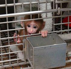 Stoppt den Missbrauch von Affenbabys
