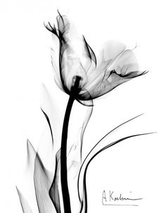 Love this x-ray flower idea for a tattoo