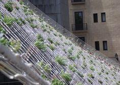 Jardín hidropónico colgante. Arts Santa Mònica, Barcelona. Malla fijada desde la cornisa hasta la base de la terraza con conos transparentes con especies de Sedum de varias coloraciones. Arts Santa Mònica, Barcelona.