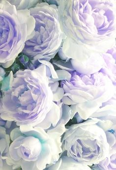 Old country roses (cabbage roses).I love cabbage roses. They look lie your Grandma's garden in such a timeless way. My Flower, Beautiful Flowers, Beautiful Gorgeous, Pretty Roses, Pretty Pastel, Flower Bomb, Romantic Flowers, Blossom Flower, Flower Wall
