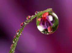 dew drops | Beautiful Dew Drops - Decent