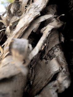 Nature + Textures + Shapes!  Nature + Textures + Shapes!  By Dave Savard