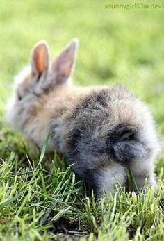 HopHop by *Photo-Grafixx on deviantART Bunny Art, Cute Bunny, Hamsters, Baby Animals, Cute Animals, Rabbit Pictures, Baby Bunnies, Bunny Rabbits, Honey Bunny