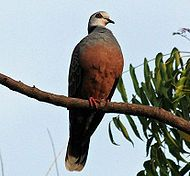 List of African birds - Wikipedia, the free encyclopedia