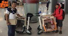 Pet Adoption, Animal Adoption, Feral Cats, Helping The Homeless, Animal Welfare, Volunteers, Dog Cat, Thailand, Europe