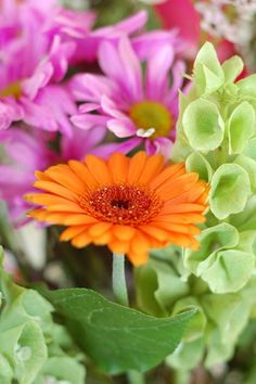 The happy and whimsical gerbera daisy