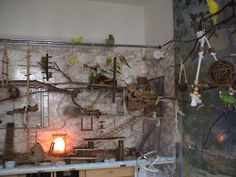 Diy Bird Cage, Bird Cages, Parrot Perch, Bird Perch, Cockatiel, Budgies, Crazy Bird, Bird Toys, Parakeet