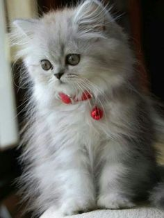 I can look at cute kittens for a long time.
