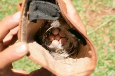 Very unusual place for a nest. This was found inside a boot.