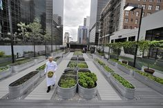 In urban farming, a different taste of L.A.  At the Jonathan Club downtown, not everyone took it well when an infrequently used paddle tennis court on a fifth-floor roof was sacrificed to gem lettuce, swiss chard and microgreens.  http://www.latimes.com/local/california/la-me-beat-urban-farming-20141112-story.html