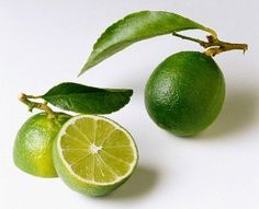"""Everbearing Persian Lime Tree - Potted - Fruit Bearing Size - Potted - Citrus by Hirts: Citrus. $22.22. Hardy in zones 10, patio or indoors. Loves the sun.. We cannot ship citrus to; American Samoa, Arizona, California, Florida, Guam, Hawaii, Lousiana, Northern Mariana Islands, Puerto Rico, Texas, Virgin Islands as per USDA Regulations.. Easy to grow. Size shipped: Growing in 8"""" pot, about 12-14"""" tall. Fruiting size.. Limes are often used to accent the flavours of foods and bever..."""
