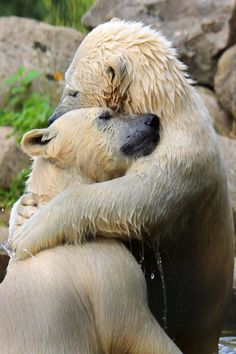 polar bear by Andre Jansen