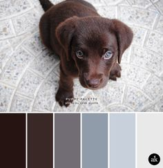 a puppy-inspired color palette