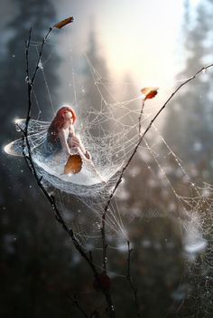 Spider web fairy Fantasy | Magical | Fairytale | Enchanting | Mystical | Myths | Legends | Stories | Dreams | Adventures